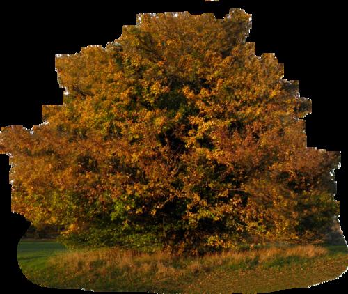Tube arbre d'automne