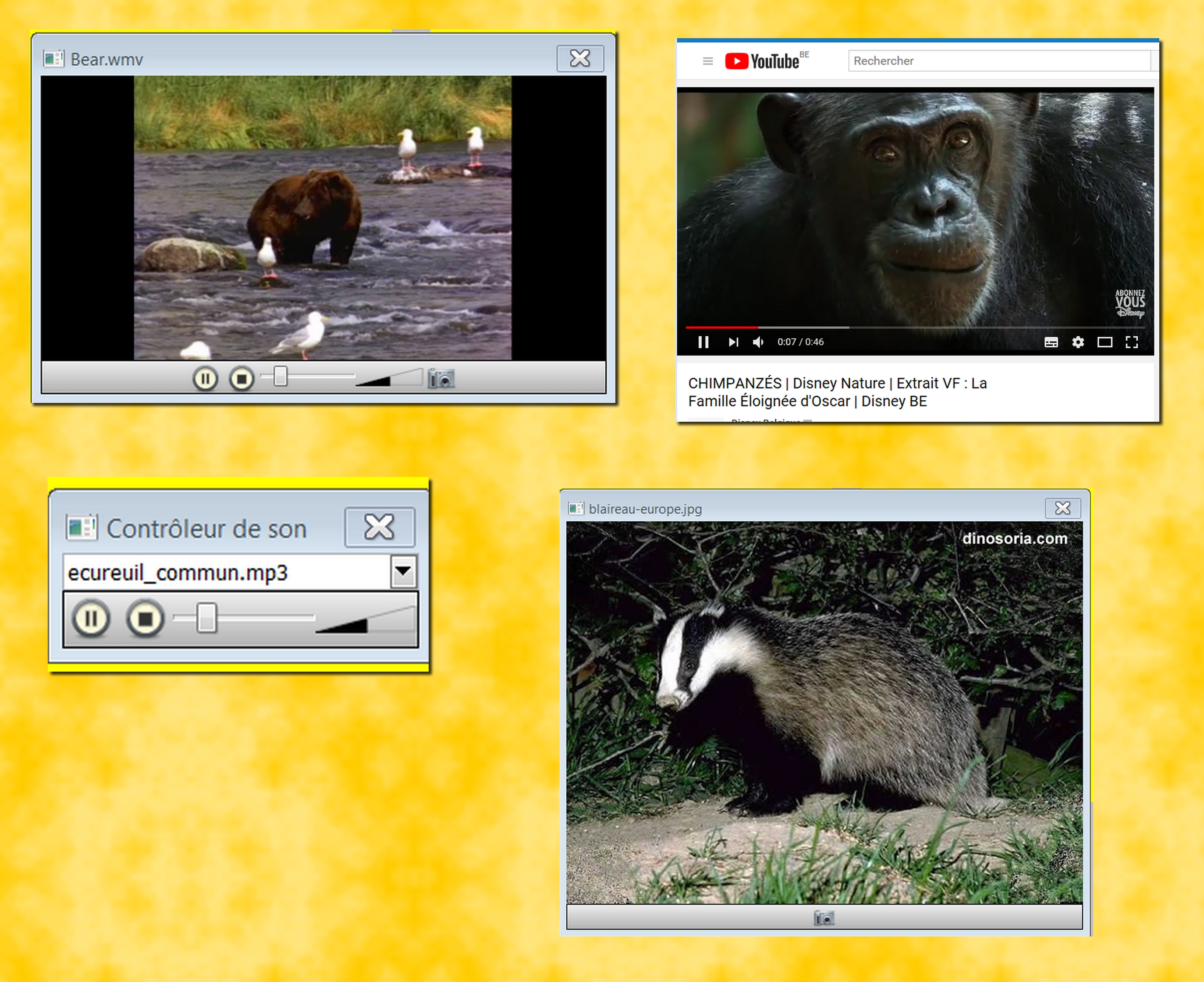 ovipare vivipare 2 presentation