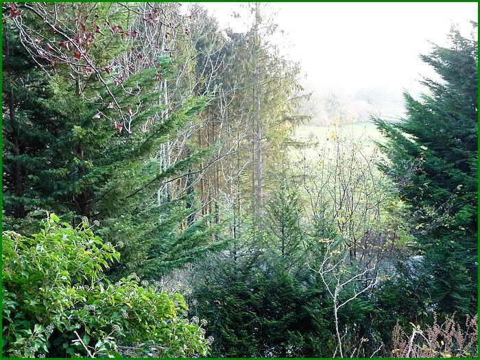 La forêt en décembre