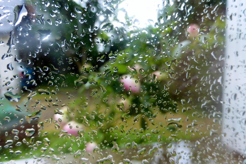 Blog en grandes vacances: mais avec quelques fleurs, sous la pluie!