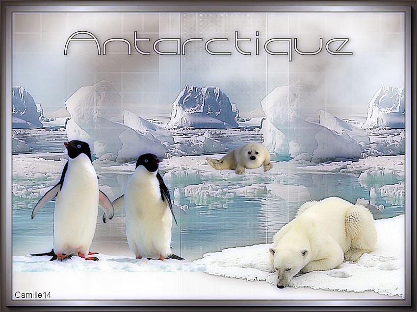 Antarctique - Page 2 190819095122860876