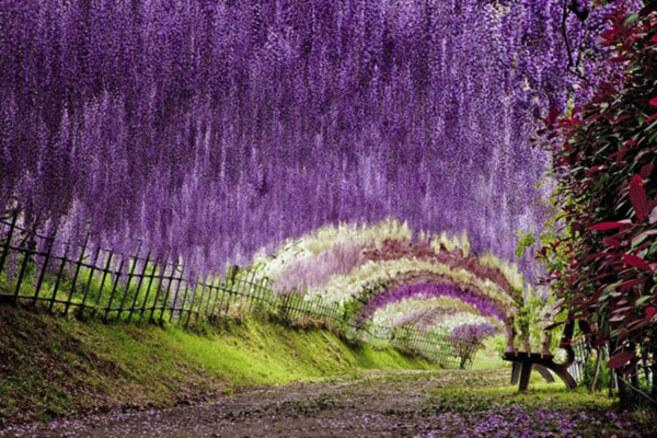 kawachi-fuji-garden-kitakyu