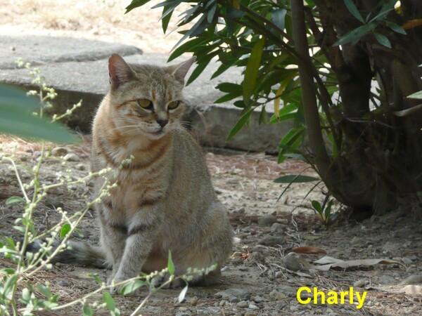 Eté 2014 : les chats de l'hôpital Saint Jean de Perpignan