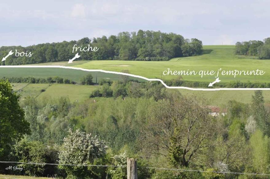 brumetz-chemin-creux-3704.jpg