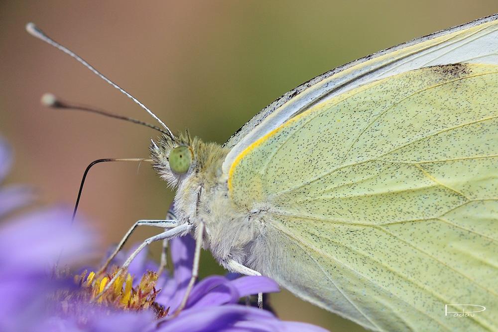 Quelques papillons
