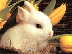 Images et photos d'animaux