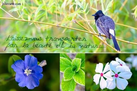 Beaute nature