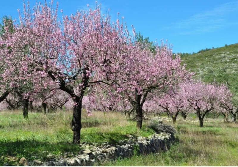 Avril à Majorque  - pêle mêle de photos de printemps.