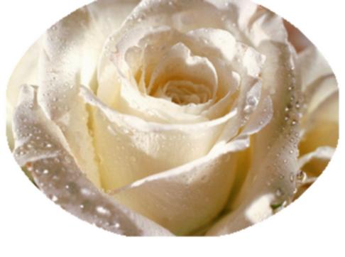 Ste-Rose