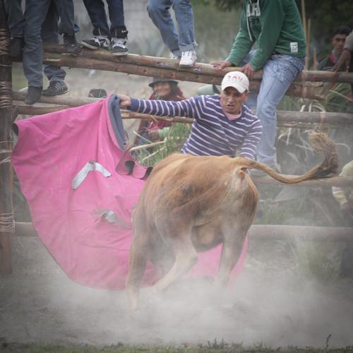 Fiesta de los toros á Gaushi