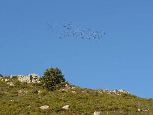 Migration des grues