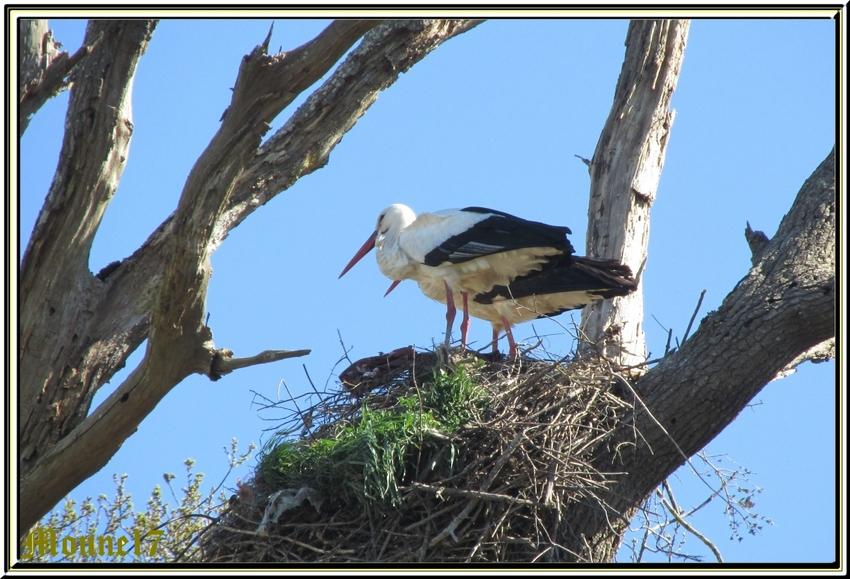 Dans les marais proches de Brouage (17)