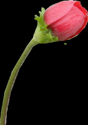 D'autres tubes de fleurs