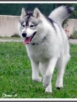 Laïka (20 mois)