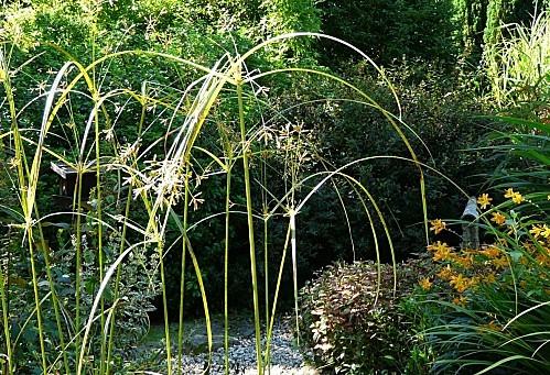 Jardin-du-Prahor-8-08-12-P1290983.JPG