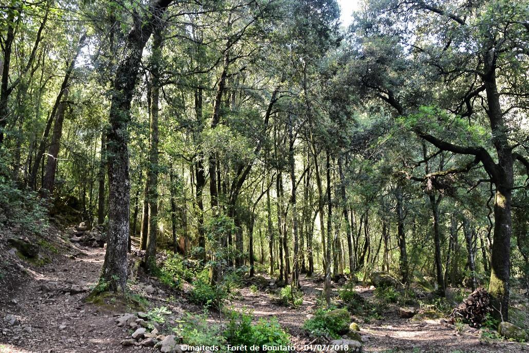 Forêt de Bonifato - Corse