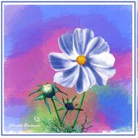 Petites cartes fleuries