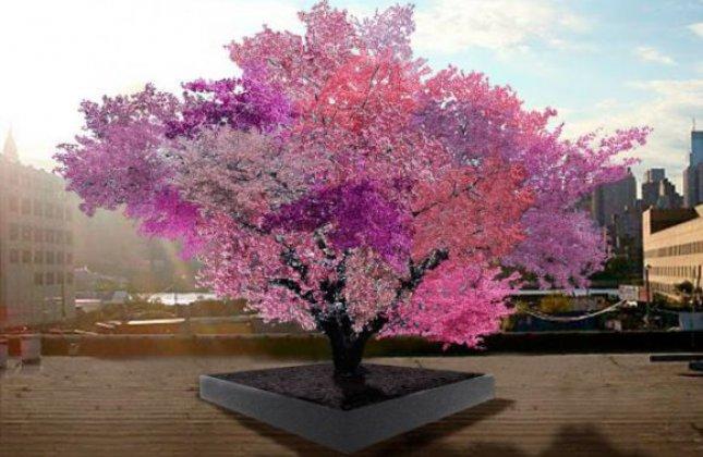 40 fruits différents pour un seul arbre !