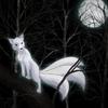 renard-blanc-16218122d