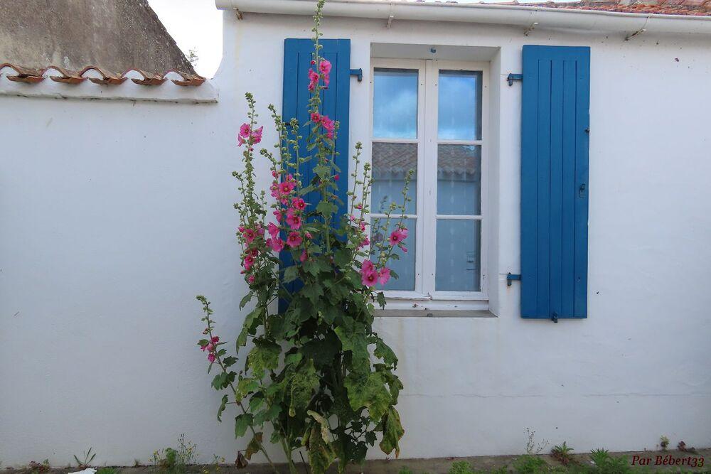 Sur l'île de Noirmoutier -2