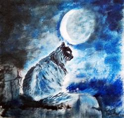 Chat de nuit