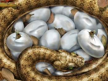 hatching_snake_eggs