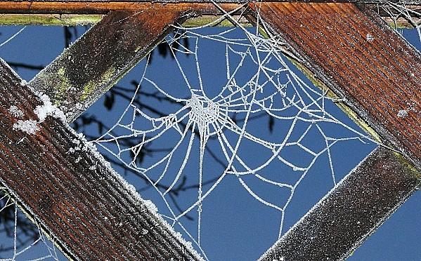 Toile-araignee-givree--29-11-10-027.jpg