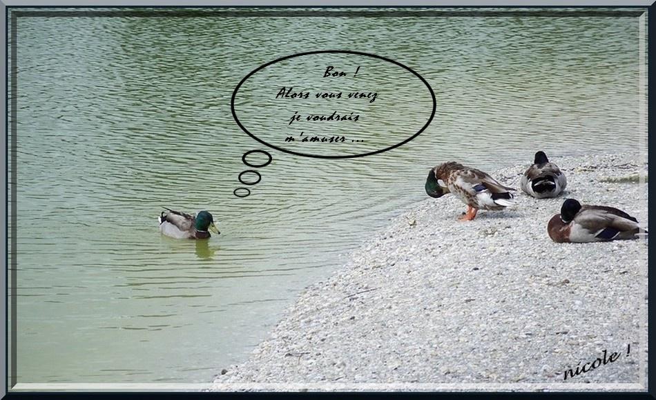 La danse des canards  27