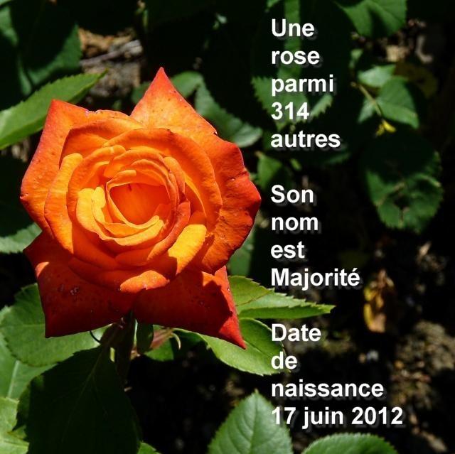 Elections 2012 1 Marc de Metz 2012