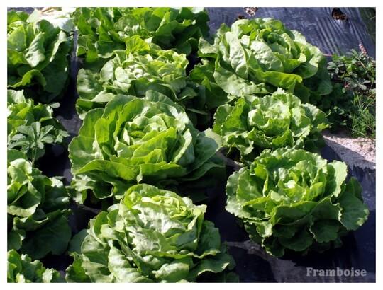 Arthon en Retz Adresse Légumes