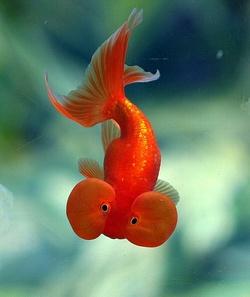Les poissons.