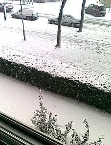 Hiver - Roses sous la neige 8 déc 2010 Paris