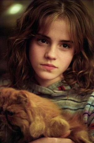 """Hermione  looks like she's thinking """"Don't you EVER touch Crookshanks again"""":"""