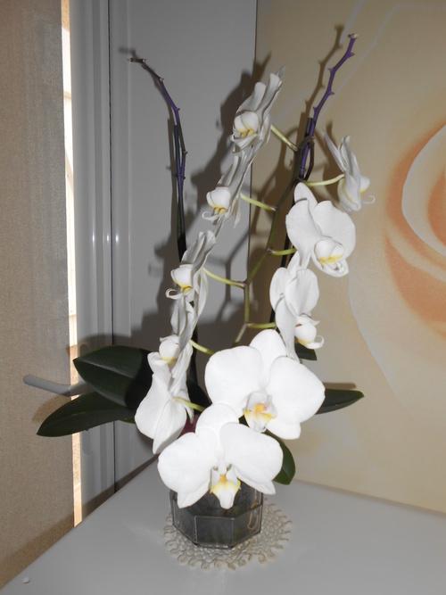 une belle orchidée