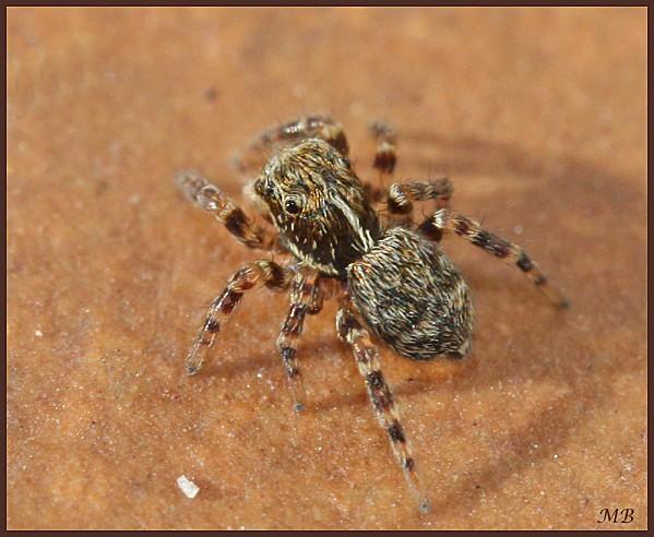 Arachnides-02-8092.jpg