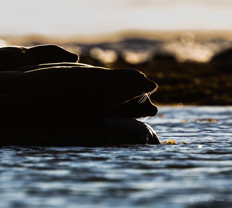 11 Août toujours, Magdalenafjorden