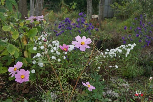 Mon jardin landais à la mi-octobre