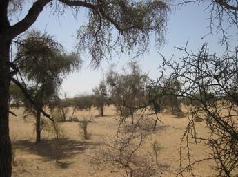 Depuis Nouakchott le retour