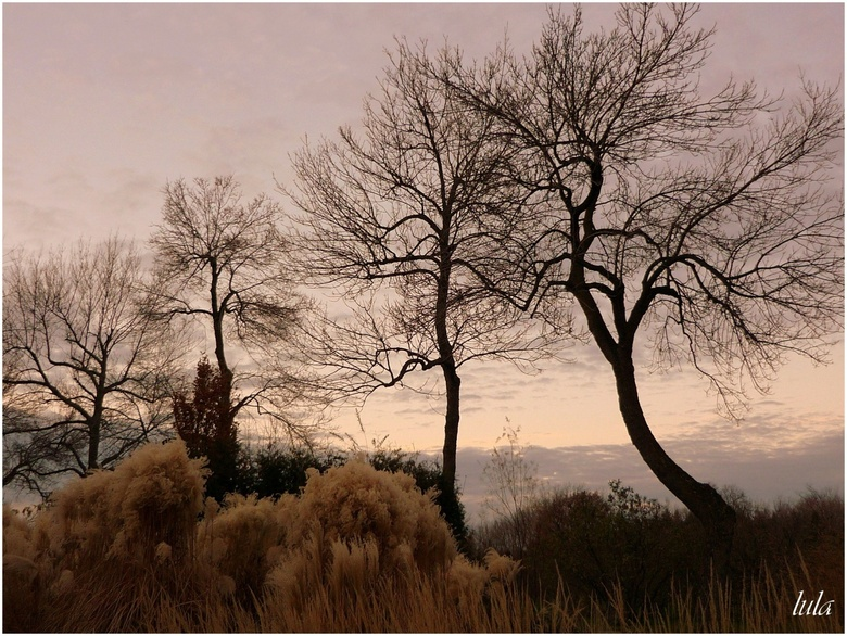 Les arbres à l'approche de l'hiver...