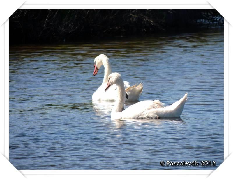 Visite aux oiseaux du Teich - 9/12