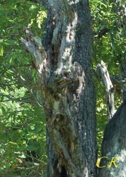 Les émanants : Anthropomorphisme dans la nature