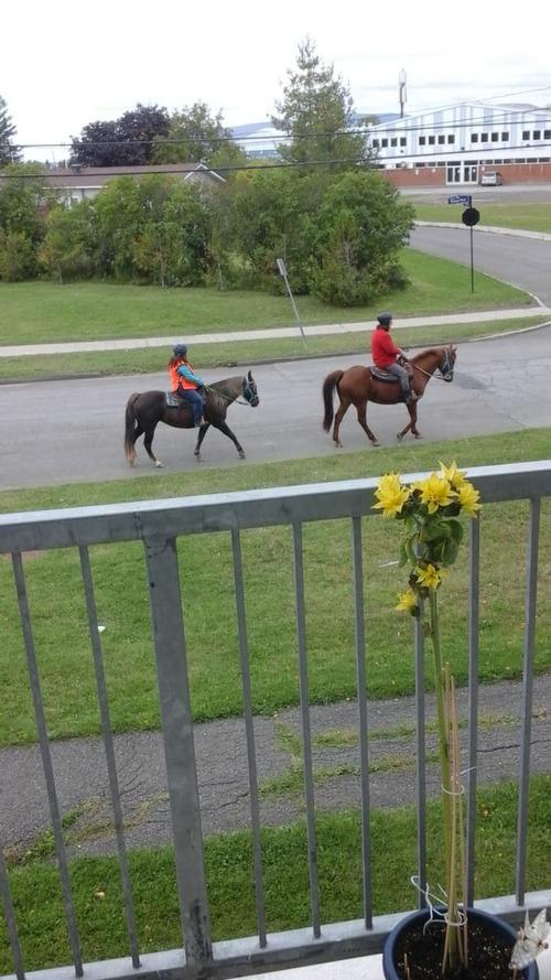 Deux beaux chevaux