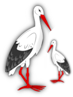 *** Winter stork ***