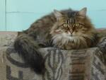 Le chat de l'écluse de Cesse : une énigme résolue !