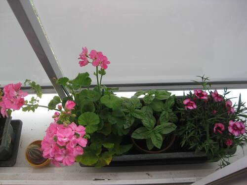 Porte-fenêtre fleurie