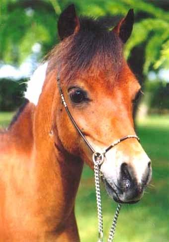 Quelque image de chevaux mignon salut tout le monde - Image des mignon ...