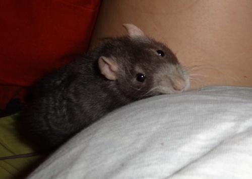 Rat-conte moi 4 loupiots - Page 2 _1ZYwSh5kUfeOgeKZZBRZUcqI-c@500x356