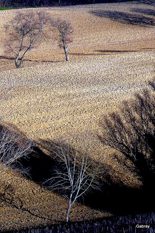 Paysages des coteaux du Tolosan