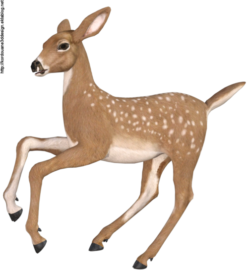 Images de biche (tube-animal-render)
