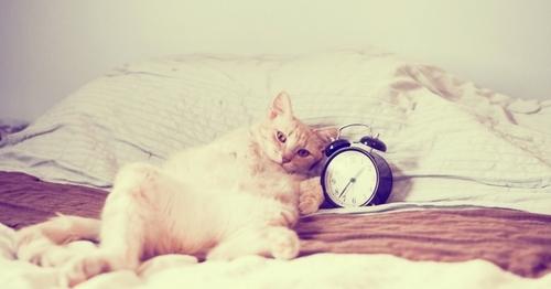Pourquoi mon chat me réveille la nuit?